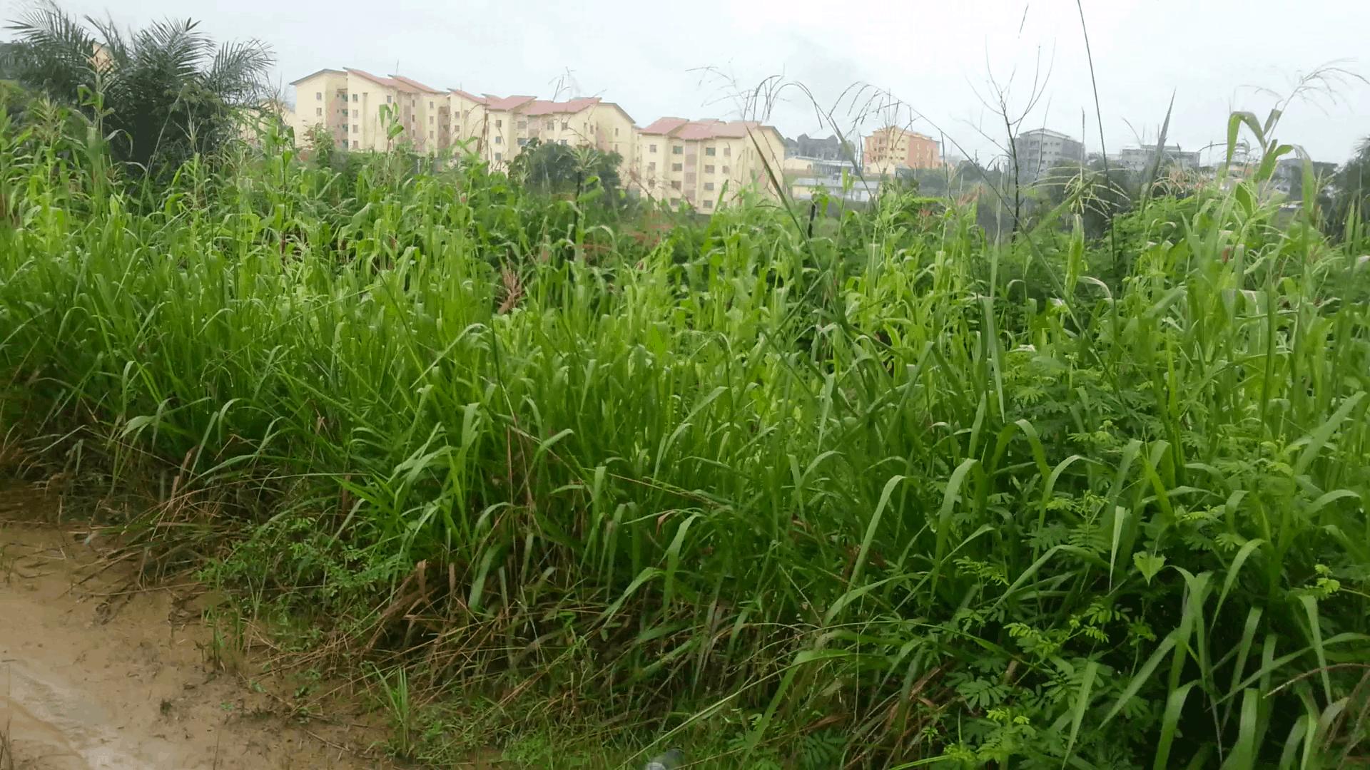Land for sale at Douala, Yassa, Maetur - 2000 m2 - 100 000 000 FCFA