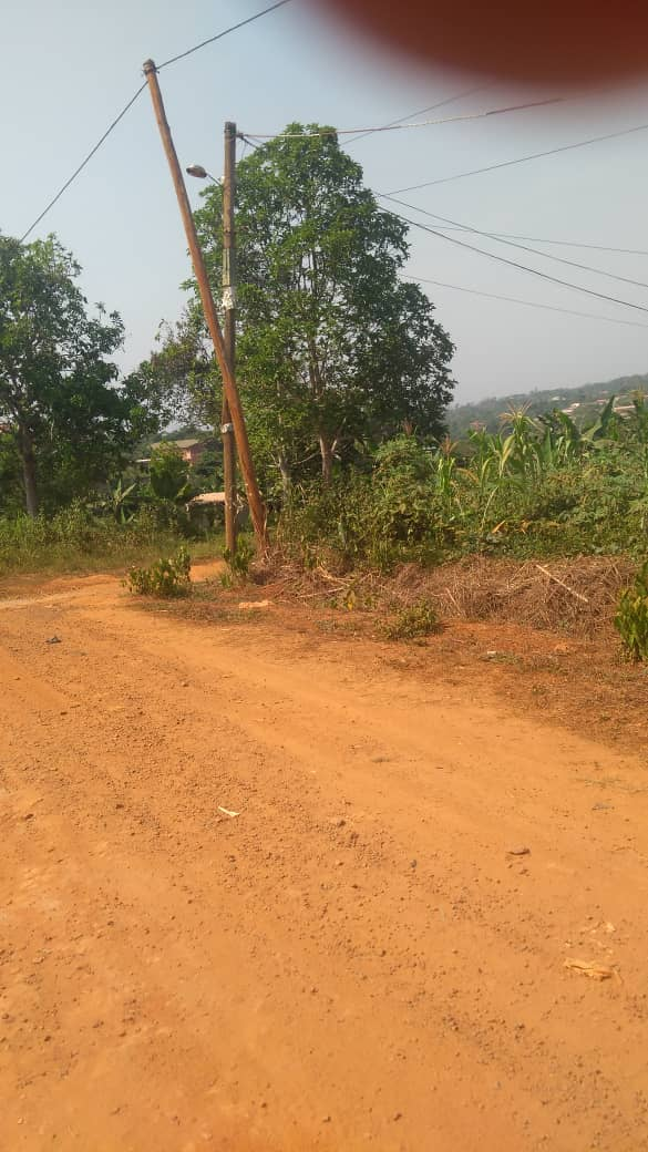 Land for sale at Yaoundé, Nkolfoulou, Soa village ntouisong - 2500 m2 - 7 000 000 FCFA