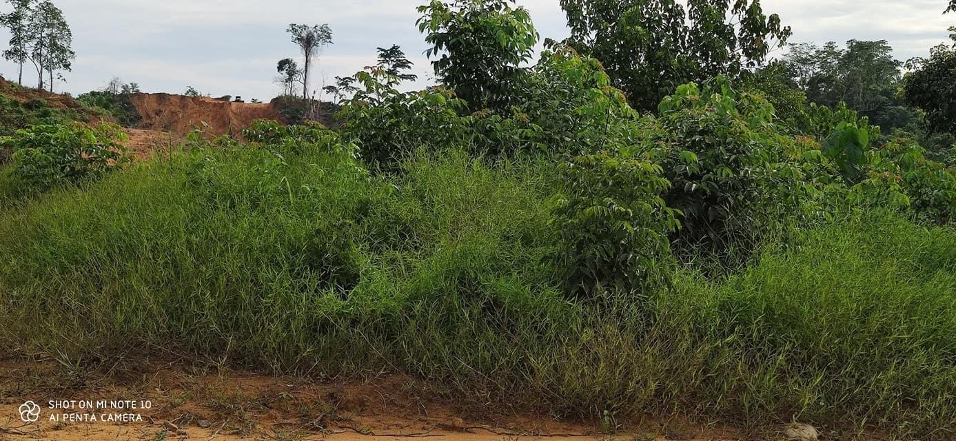 Land for sale at Douala, PK 27, Carrefour TONDE - 70000 m2 - 3 500 000 FCFA