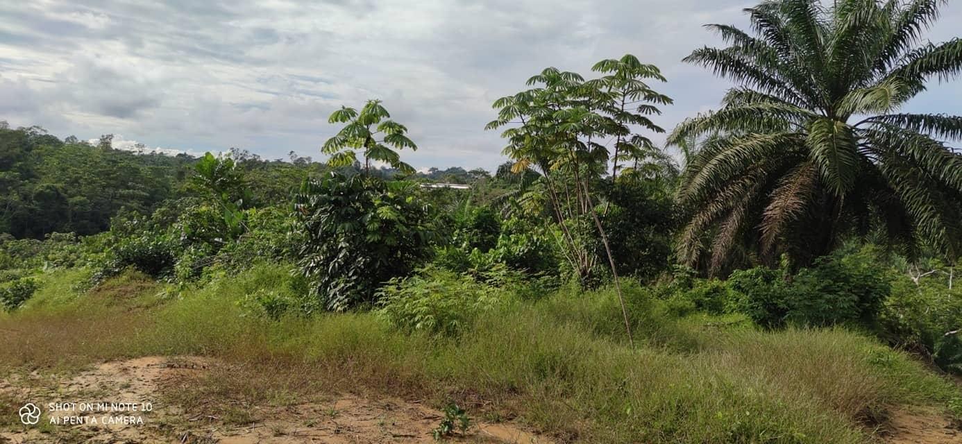 Land for sale at Douala, PK 27, Carrefour TONDE - 90000 m2 - 2 500 000 FCFA