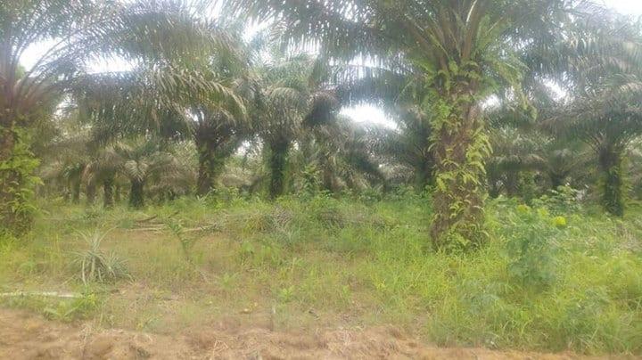 Land for sale at Douala, PK 20, Non loin de l'église catholique de PK 21 - 35000 m2 - 6 500 000 FCFA