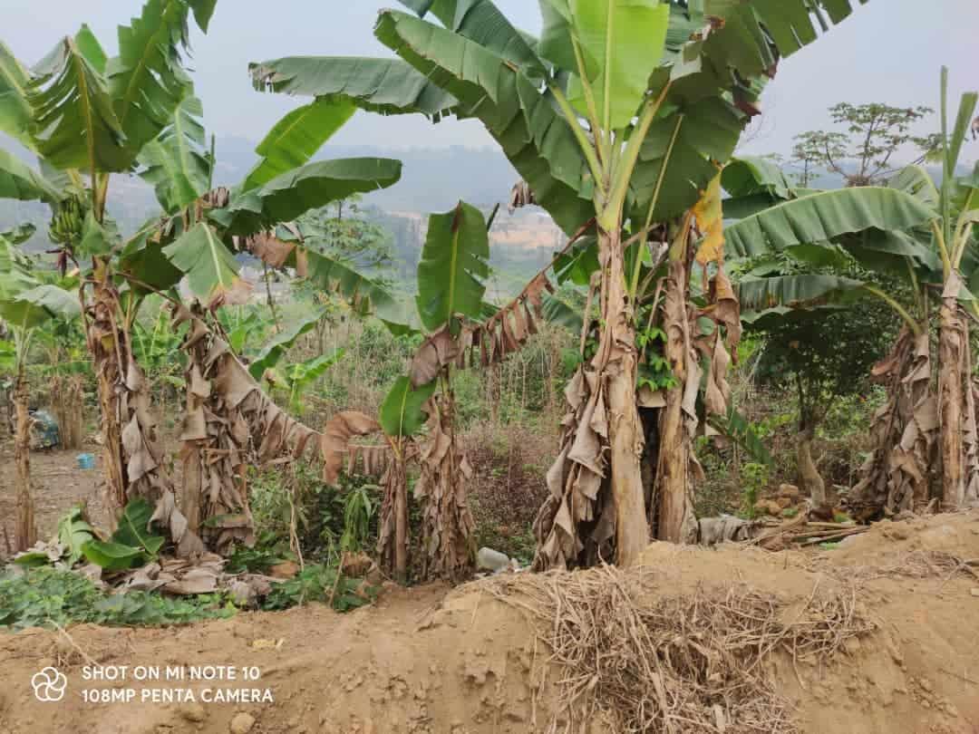 Terrain à vendre - Douala, Lendi, Derrière la chefferie - 500 m2 - 12 500 000 FCFA