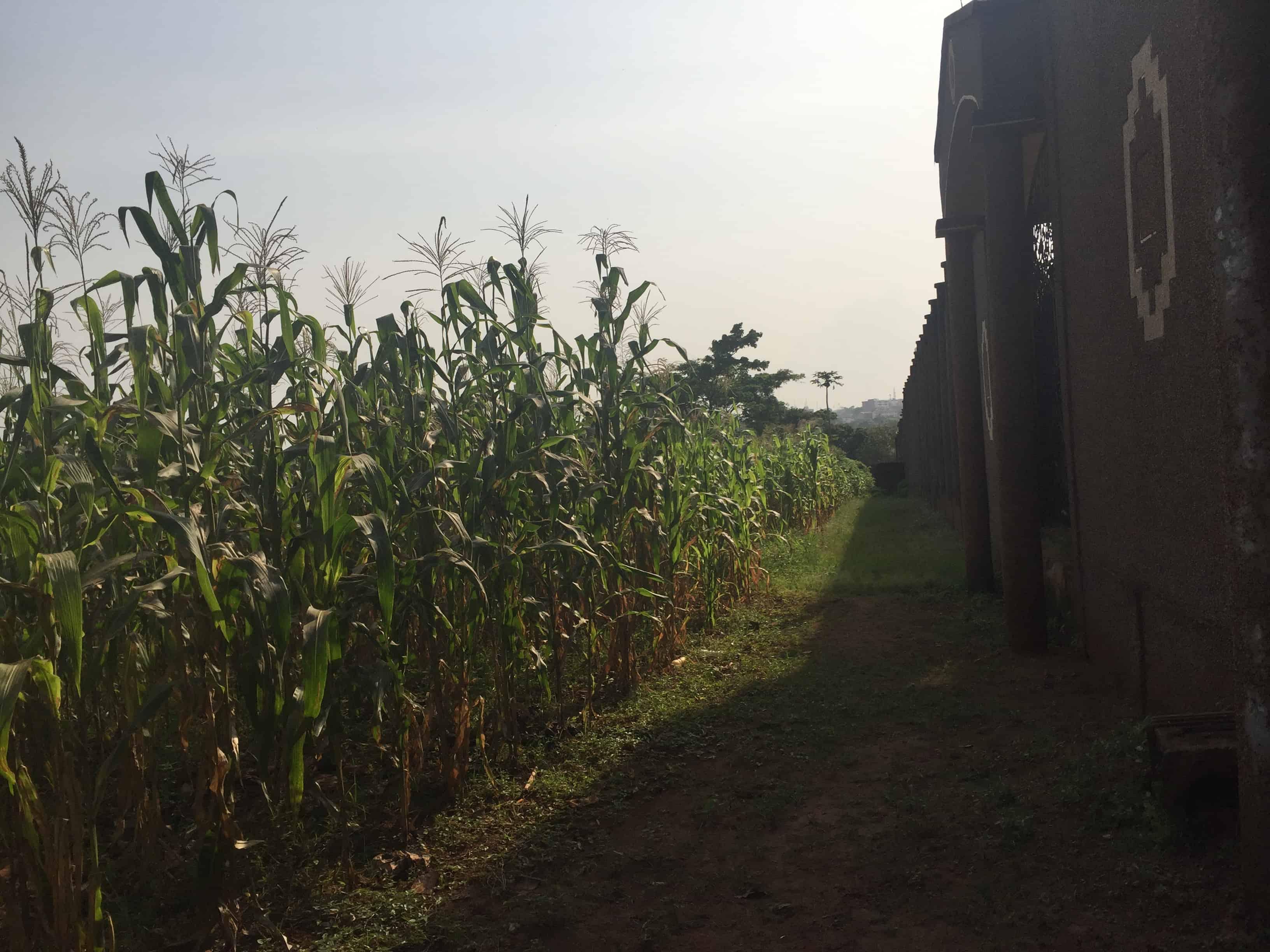 Land for sale at Yaoundé, Ngousso, Yaoundé - 1000 m2 - 40 000 000 FCFA