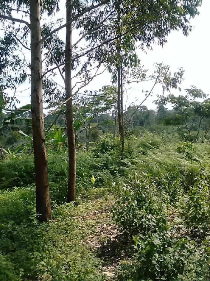 Land for sale at Yaoundé, Centre administratif, centre - 10000 m2 - 30 000 000 FCFA