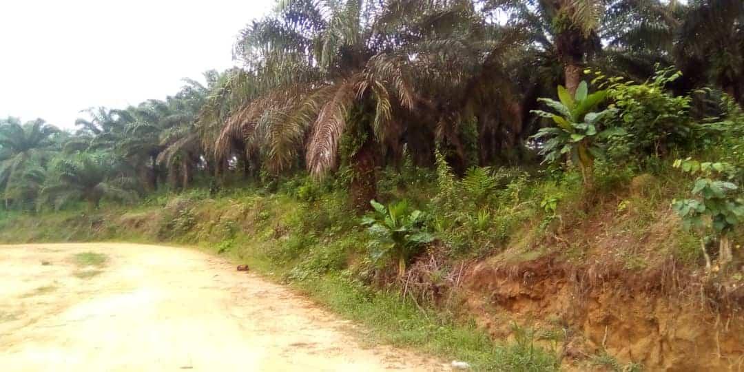 Land for sale at Douala, Lendi, Ngombe ville - 200000 m2 - 4 000 000 FCFA