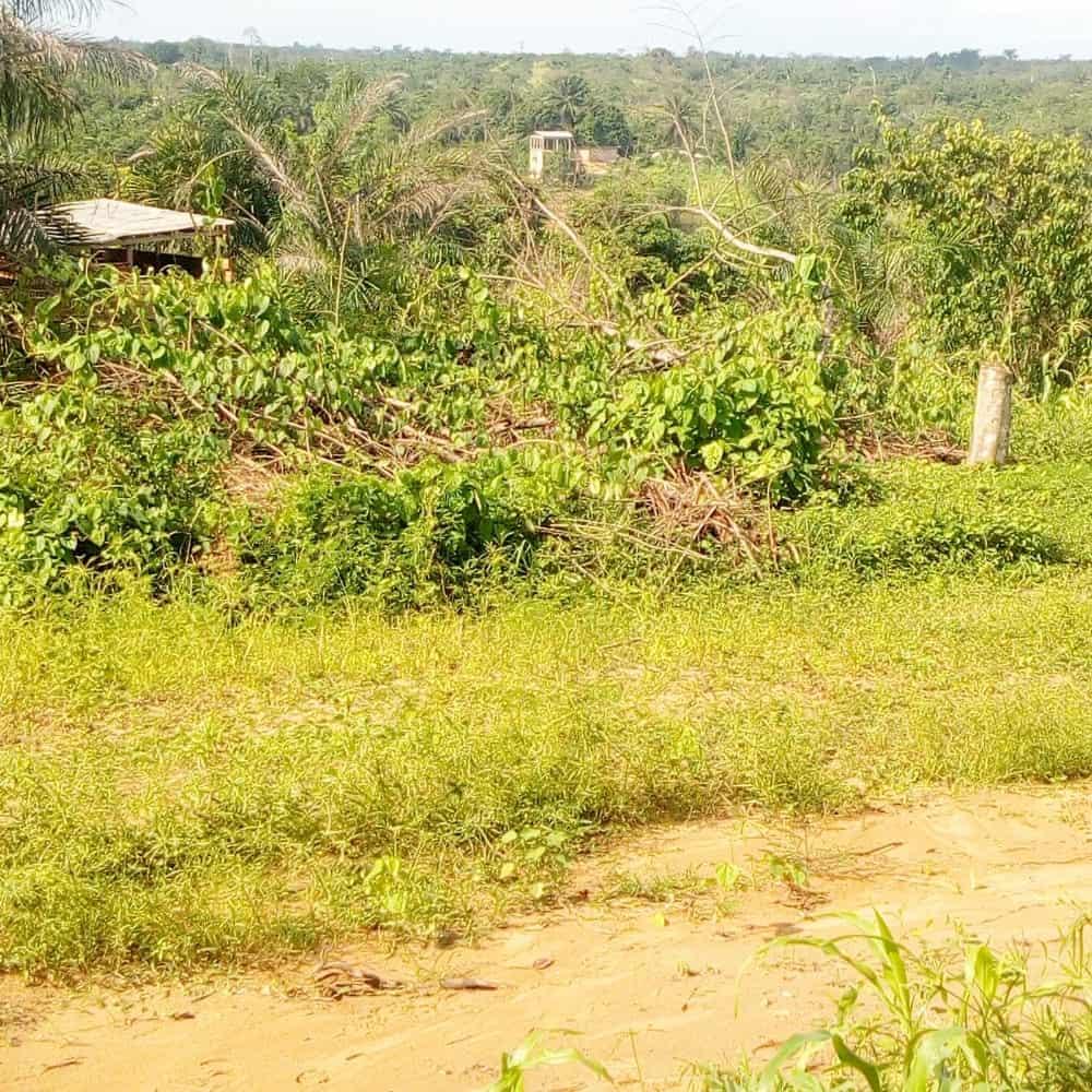 Land for sale at Douala, PK 27, Entrée Guinness - 10000 m2 - 40 000 000 FCFA