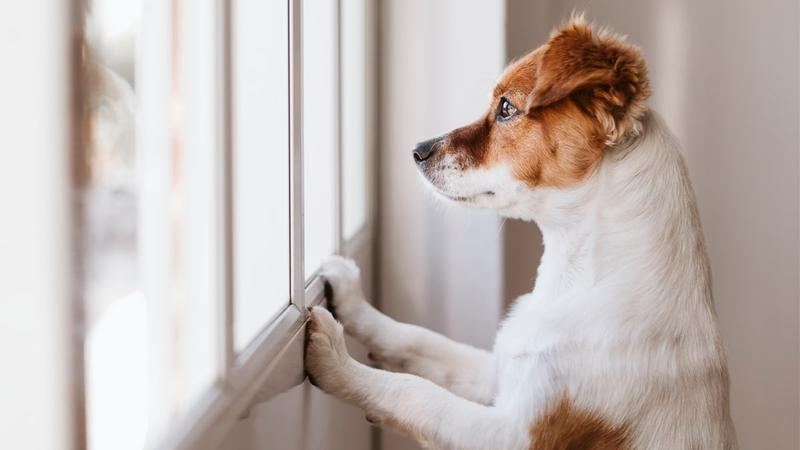 Insurance For Dogs >> Dogs And Your Home Insurance Insurancehotline Com