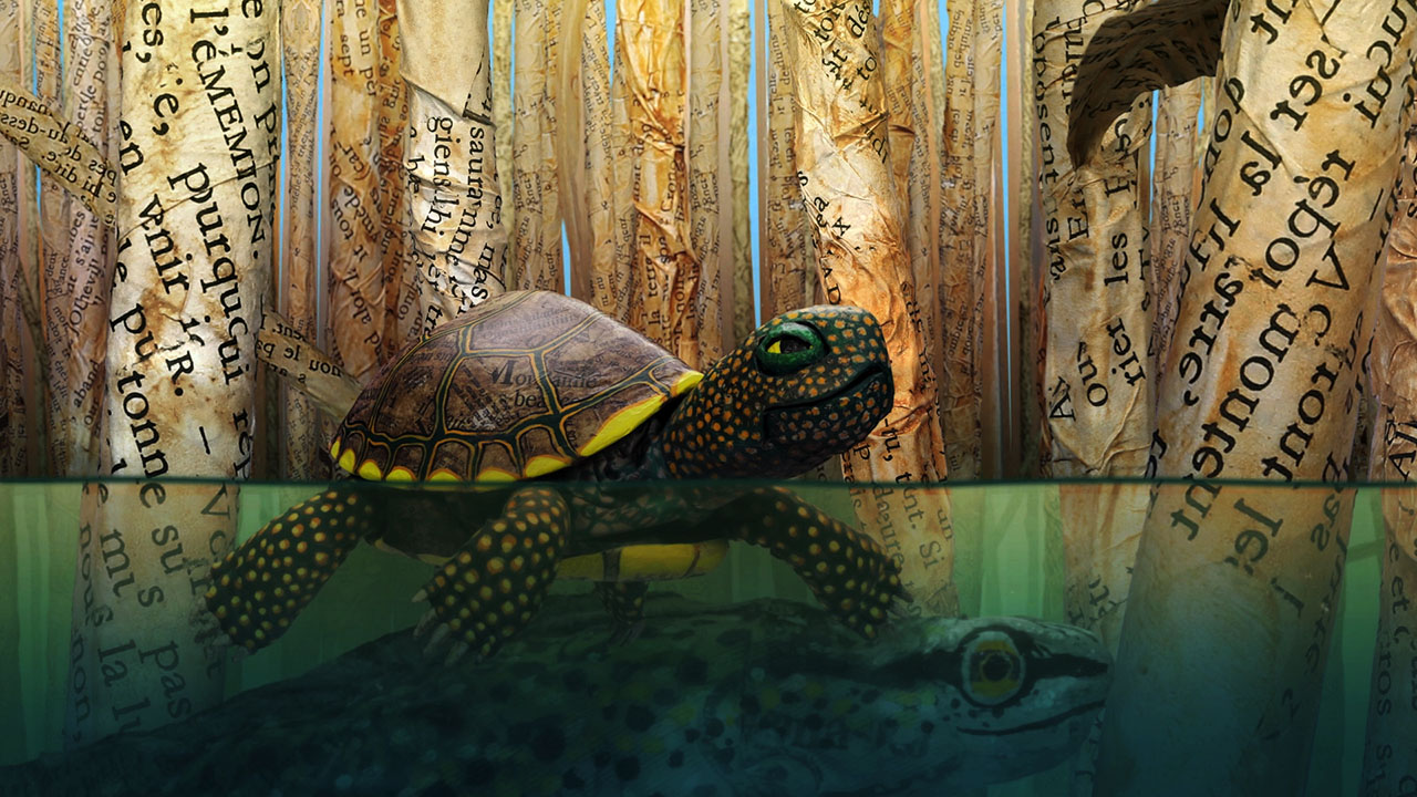 "Hello World: ""Pond Turtle"""
