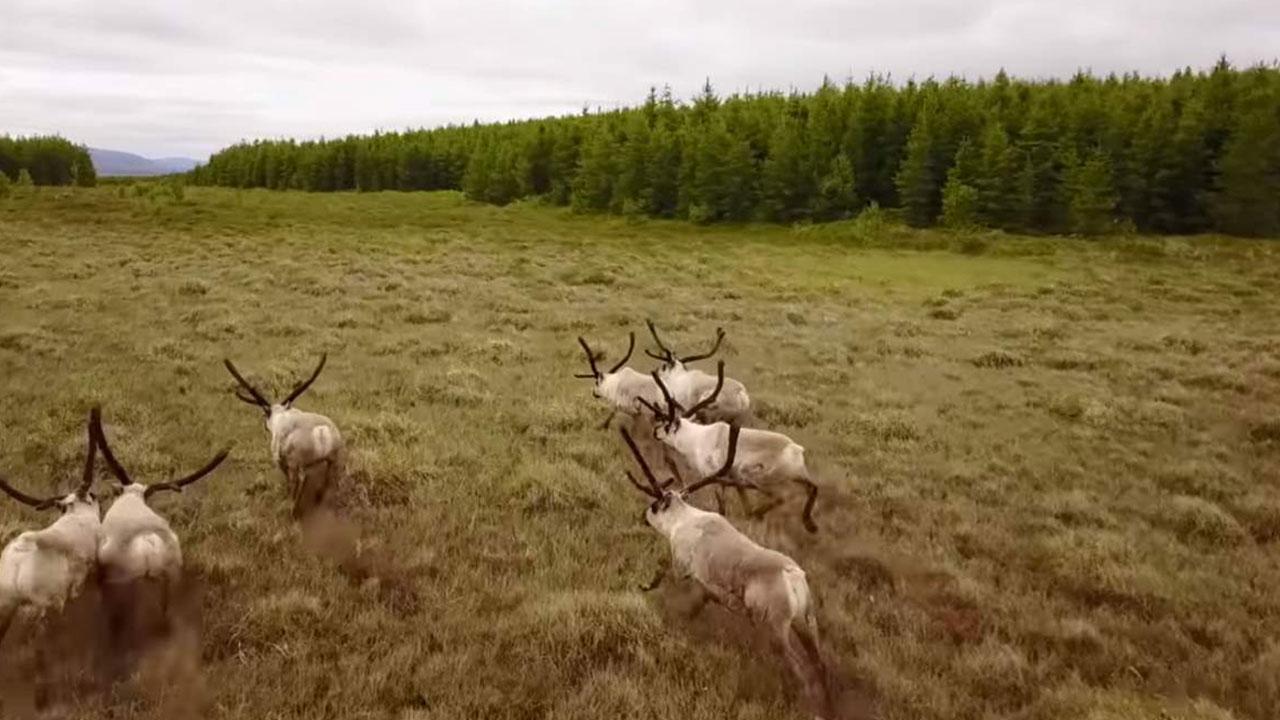 Afforesting Iceland