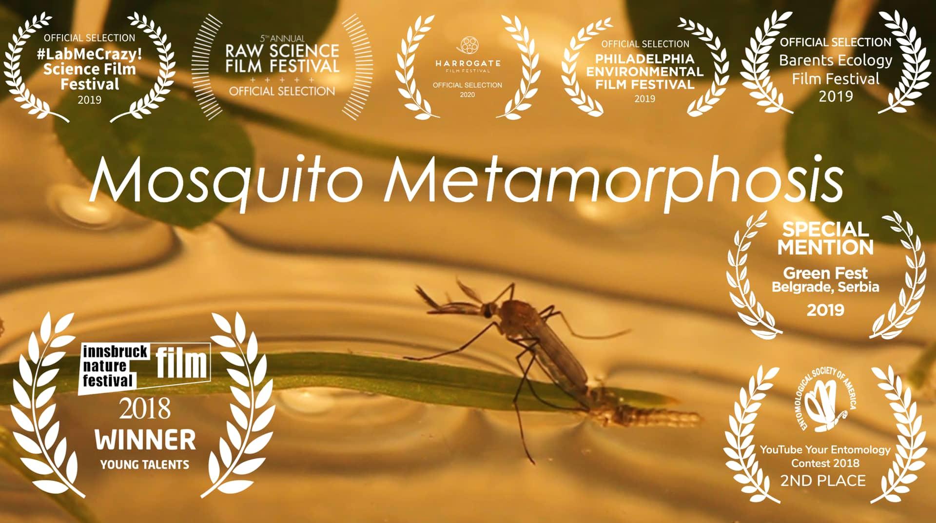 Mosquito Metamorphosis
