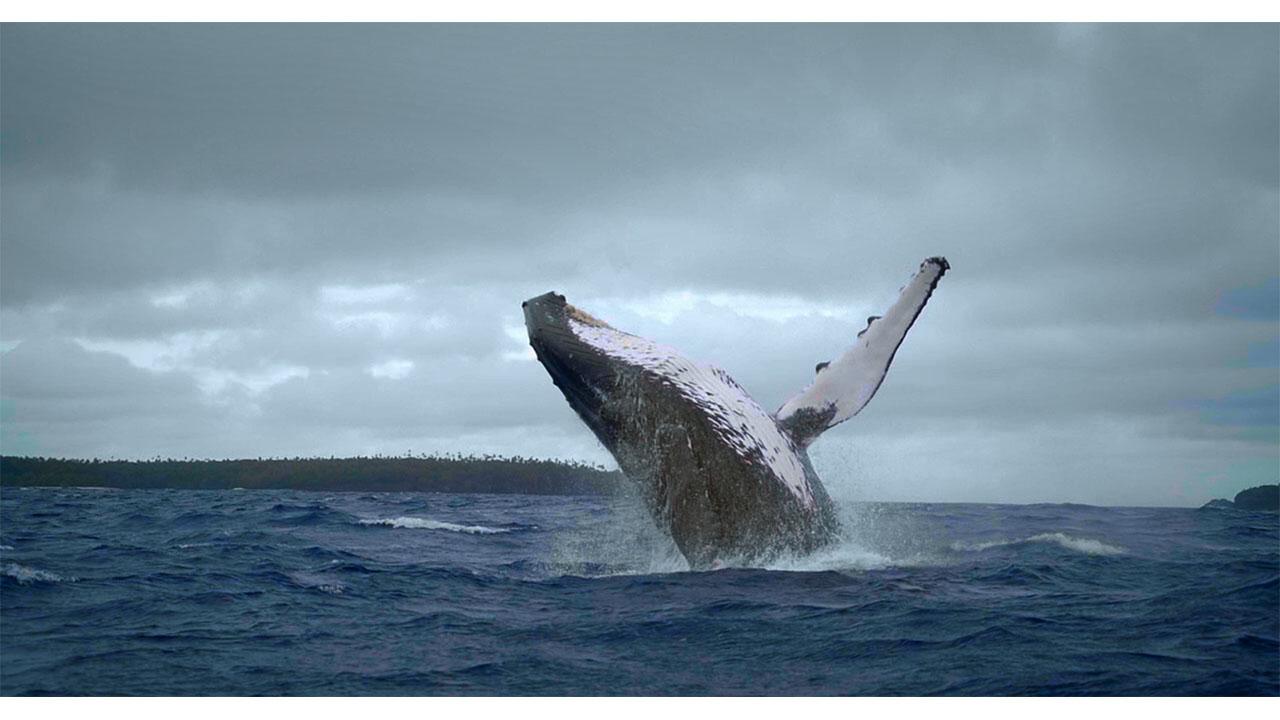 Whale Island (Nan Ren He Ta De Hai)