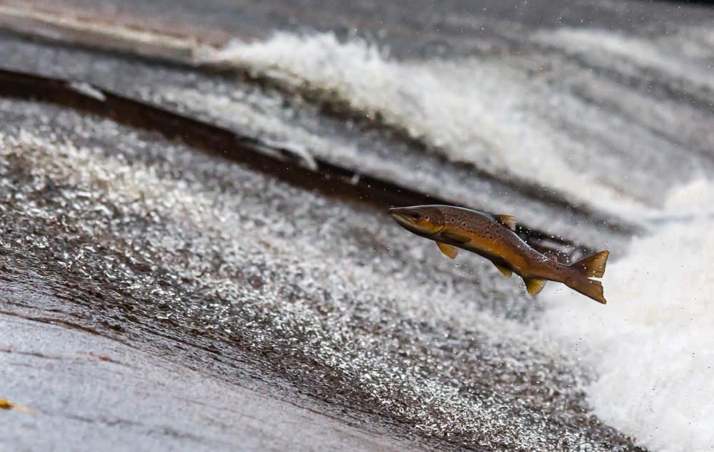 Určit lokality, kde jsou ryby nejvíce kontaminované, je prý hodně složité - 7. února