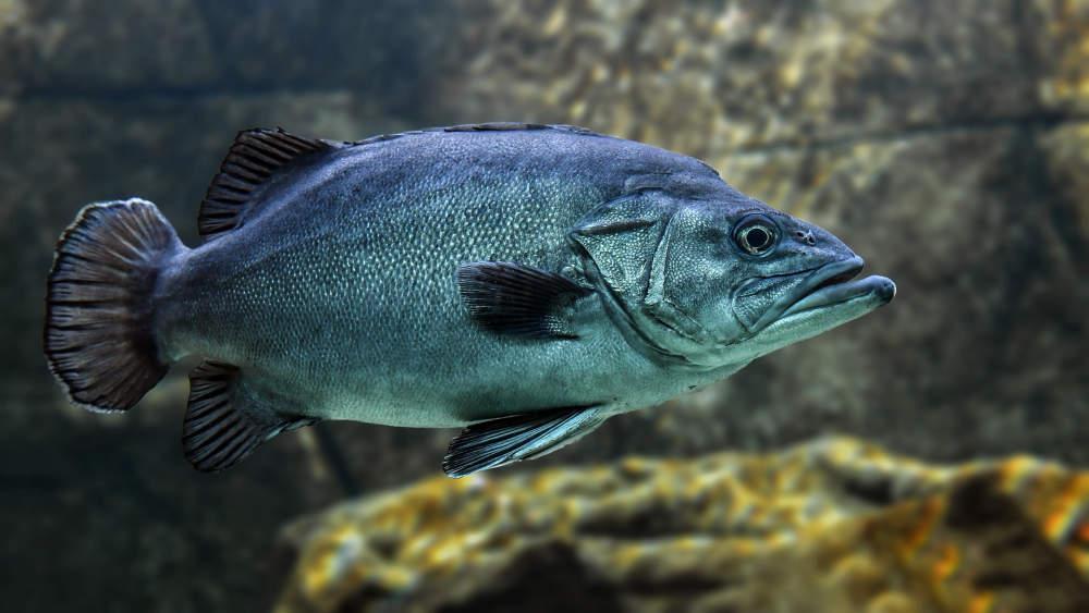 Ryby akumulují zbytky léčiv