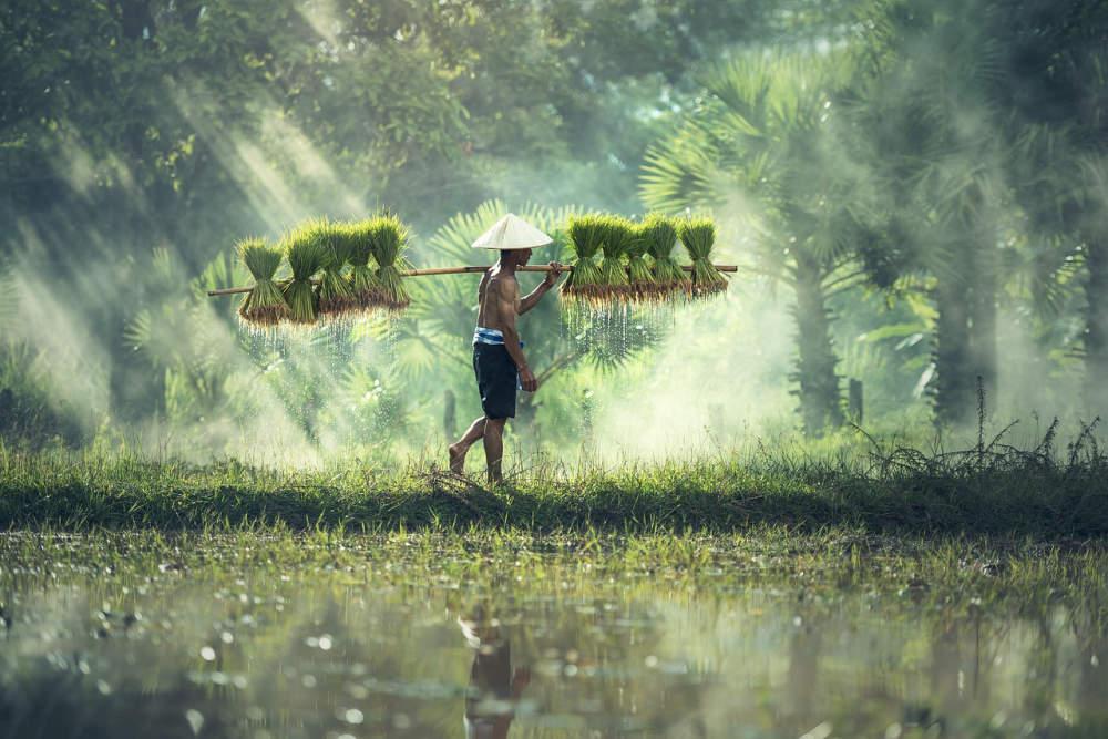 Jste alergičtí na pšenici? Pozor také na rýži!