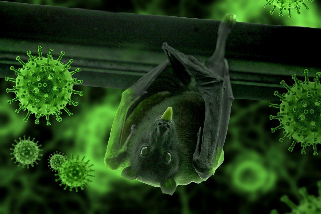 Pixabay/Syaibatul Hamdi: (Korona)virus je virus, je virus, je virus...