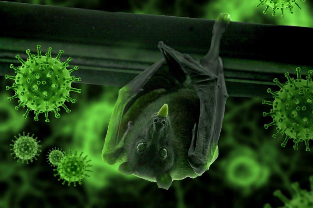 (Korona)virus je virus, je virus, je virus...