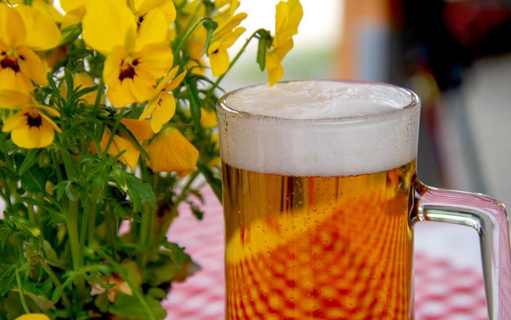 Stanovení aromatických alkoholů v pivu s využitím metody extrakce na pevné fázi (SPE) a detekce pomocí spojení plynové chromatografie s hmotnostní spektrometrií (GC-MS). Část II. - Obsah aromatických alkoholů v českých pivech.