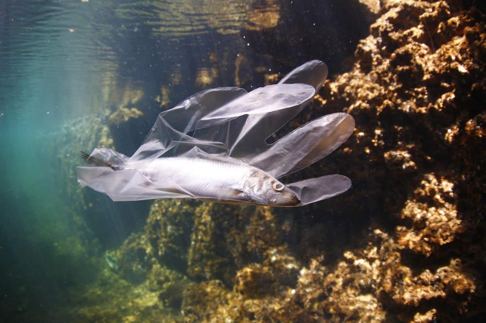 Vývoj polymerů může významným způsobem snížit znečištění moří a půdy
