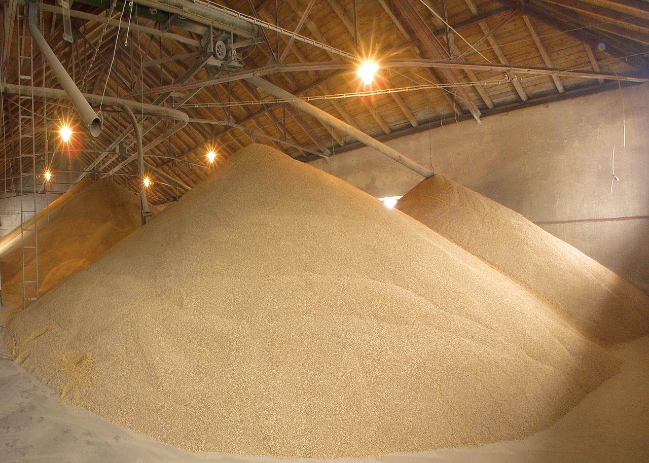 Pixabay/Bohumil Sluka: Stanovení obsahu lipidů a zastoupení mastných kyselin v obilkách ječmene a ve sladu