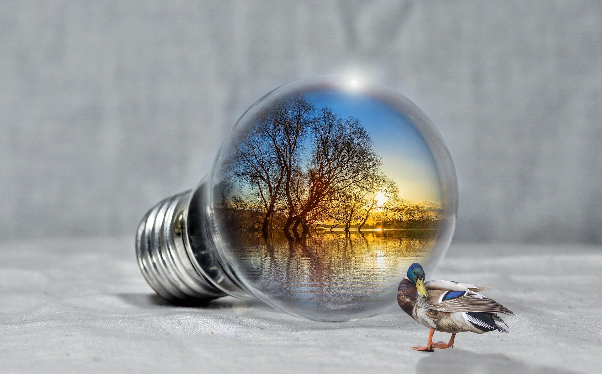 Pixabay/PIRO4D: Životní prostředí - přehled aplikačního použití LC/MS/MS systémů 2020-2021