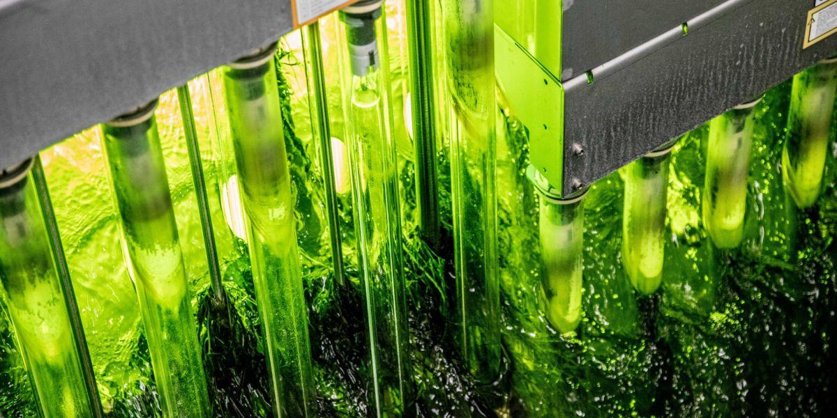 Porvoonjoen tilassa merkittävä parannus jätevesien UV-desinfioinnin myötä - Lahti Aqua