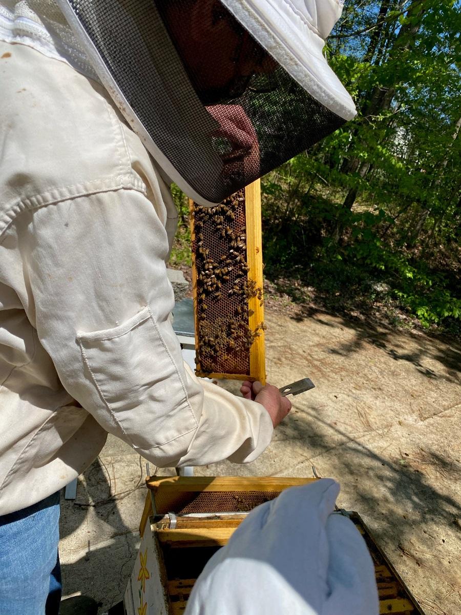 Residents at Lakewood Senior Living plant wildflowers for Honeybees