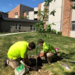 Team members at Lakewood plant tress to recognize Arbor Day