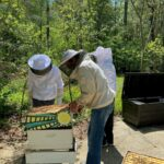 Residents at Lakewood Retirement Community plant wildflowers for Honeybees 6