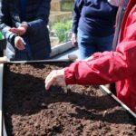Senior Resident at Lakewood planting wildflower seeds for honeybees