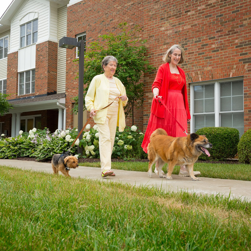 Senior women walking dogs