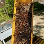Residents at Lakewood Retirement Community plant wildflowers for Honeybees 8