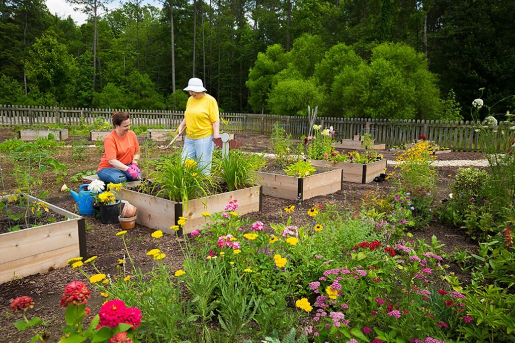 Gardening in Community Garden at Lakewood Independent Living