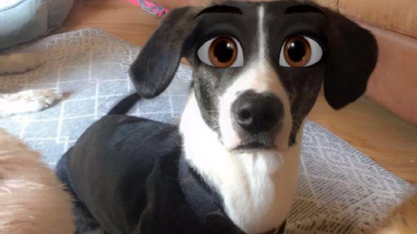 perrito con filtro
