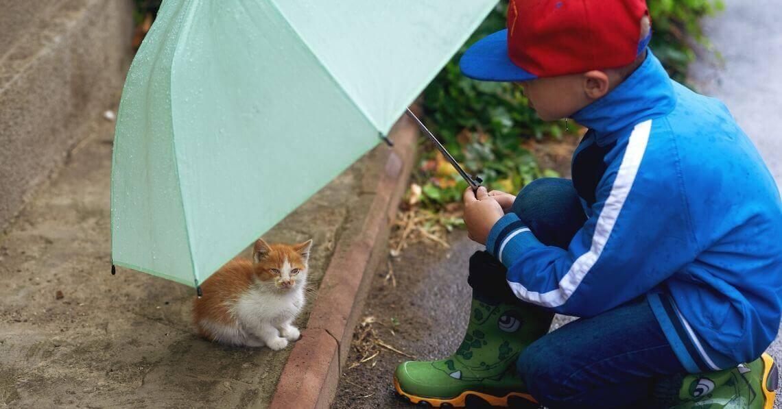 A boy holding an umbrella over a kitten