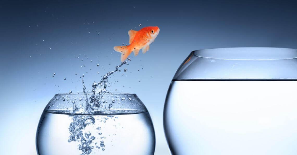 Fish jumping to a bigger bowl