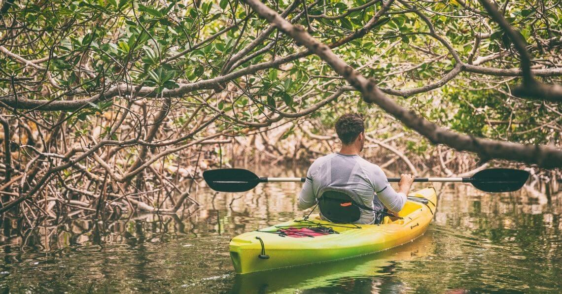 Man kayaking in mangroves