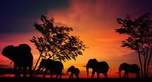 Thumb cfta afrika