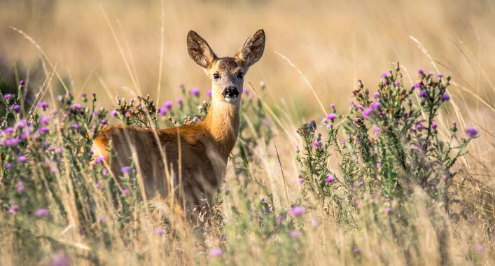Wildwechsel im Herbst: So sind Sie auf der sicheren Seite!