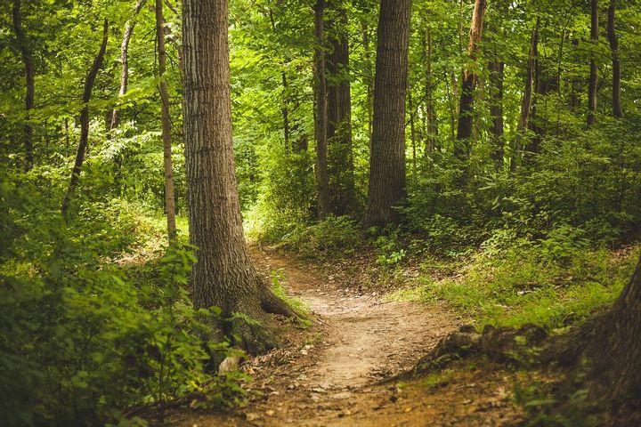Achtsames WaldWandeln in Eberswalde