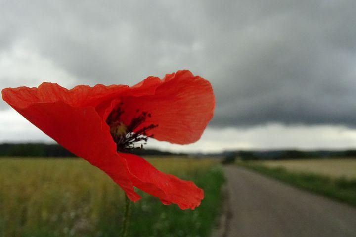 Lebendige Natur-Fotos - selbstgemacht
