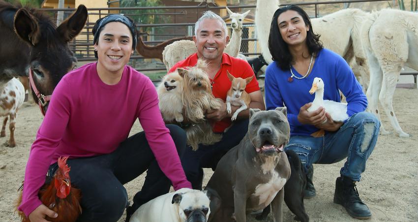 """Der Hundeflüsterer aus den USA - Cesar Millan kommt im Herbst mit seiner """"It's All About Family""""-Tour nach Deutschland"""
