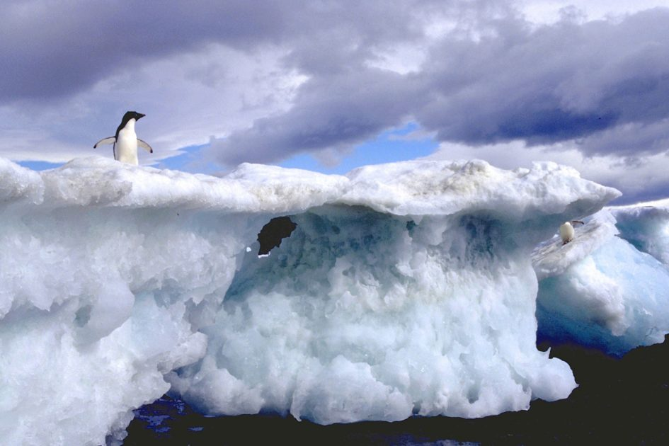 Adélie penguin in the Antarctic: Photo by Oceanites