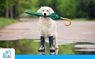 Tempête Alex, inondations… Comment bien recourir à votre assurance habitation en cas de catastrophe naturelle?