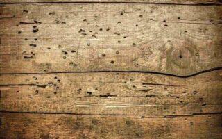 Vente d'une maison avec des termites, quels recours après l'achat?
