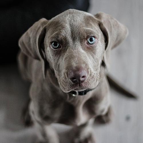 Comment l'assurance habitation peut-elle protéger des dégâts causés par vos animaux?