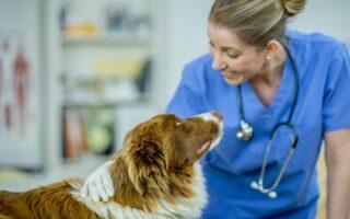 L'assurance pour chien dangereux de catégorie 1 ou 2