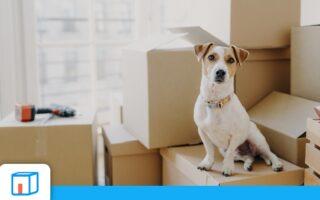 Mes biens sont-ils assurés lors d'un déménagement?