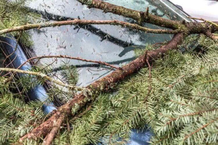 Un arbre est tombé sur votre voiture: êtes-vous assuré?
