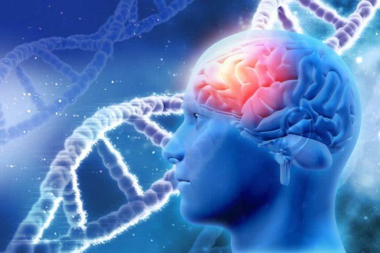 Focus sur les principales maladies neurodégénératives