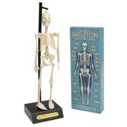 Anatomisch skelet